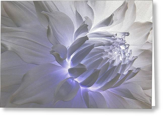 Dahlia Inner Beauty Greeting Card