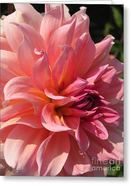 Dahlia Named Fire Magic Greeting Card by J McCombie
