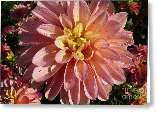 Greeting Card featuring the photograph Dahlia October by Susan Garren