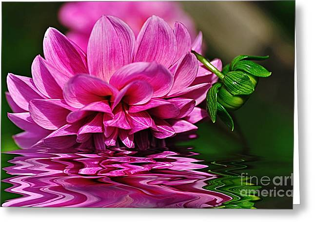 Dahlia On Water Greeting Card by Kaye Menner