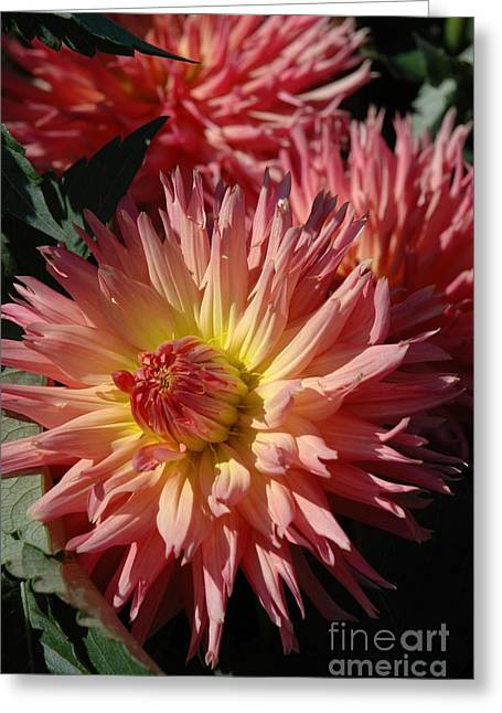Greeting Card featuring the photograph Dahlia Viii by Christiane Hellner-OBrien