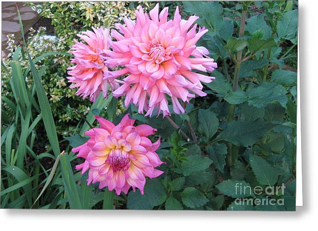 Dahlias Greeting Card by Marlene Rose Besso
