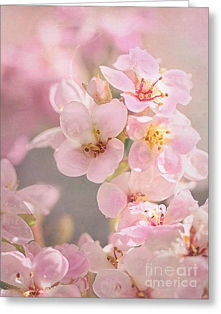 Dainty Blossoms Of Spring Greeting Card