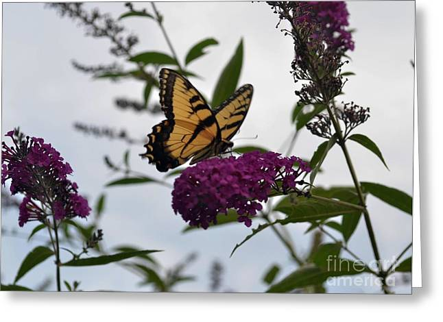 Greeting Card featuring the photograph Dainty by Judy Wolinsky