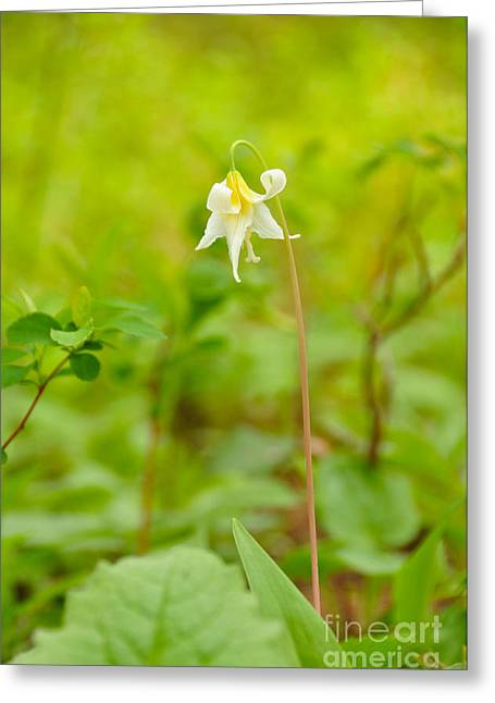 Dainty Lovely Greeting Card by Birches Photography