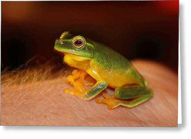 Dainty Tree Frog  Greeting Card