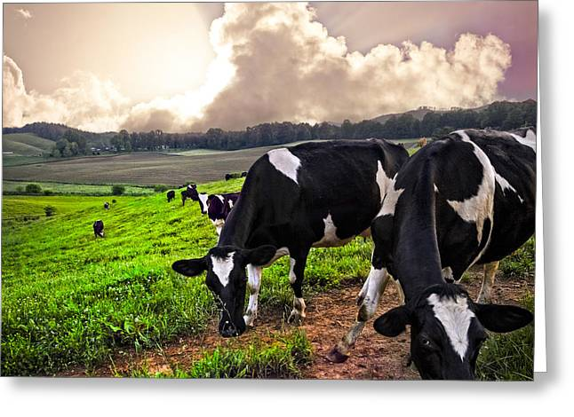 Dairy Cows At Sunset Greeting Card by Debra and Dave Vanderlaan