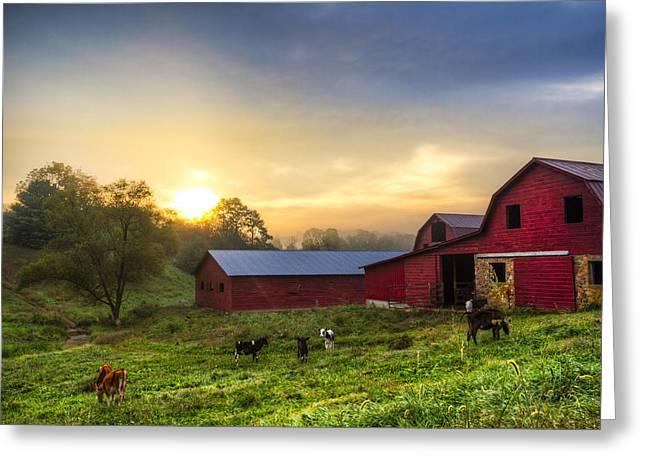 Dairy Dawn Greeting Card by Debra and Dave Vanderlaan