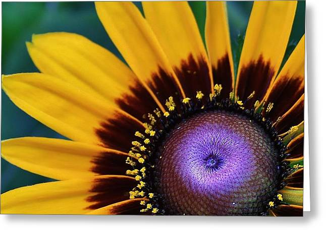 Daisey Of A Different Color Greeting Card by Bruce Bley