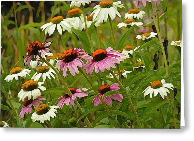Daisies And Cone Flowers Greeting Card by Selma Glunn