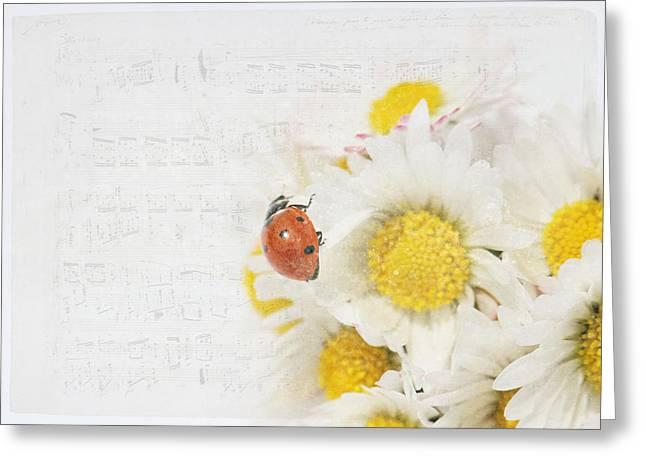 Daisies And Ladybug Greeting Card