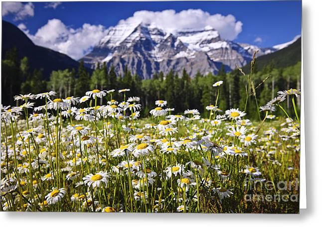Daisies At Mount Robson Greeting Card