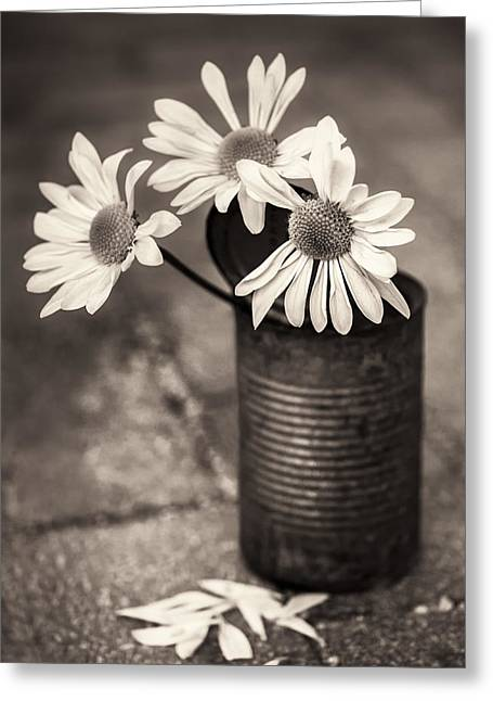 Daisies Can Greeting Card
