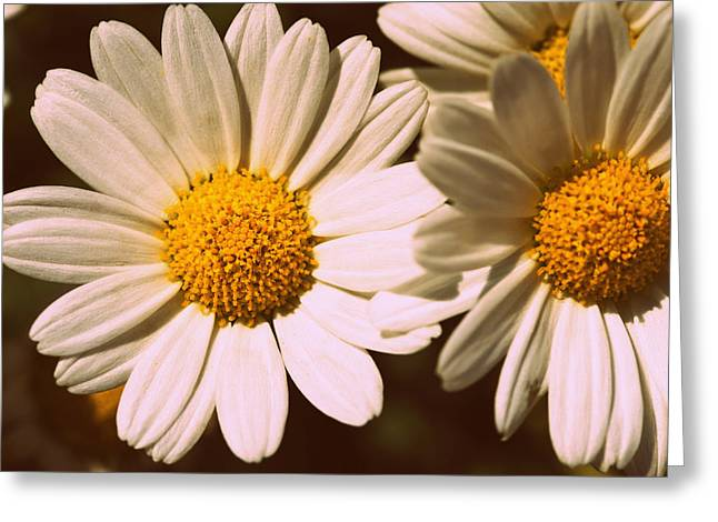 Daisies Greeting Card by Chevy Fleet