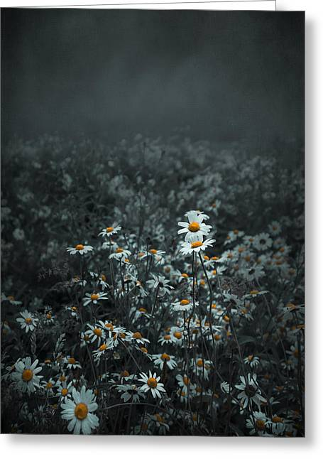 Daisies-daisies Greeting Card by Svetlana Sewell
