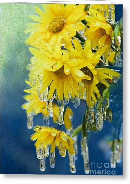 Daisies In Ice Greeting Card by Betty LaRue