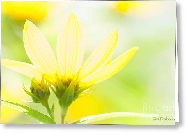 Daisies In The Sun Greeting Card by David Perry Lawrence