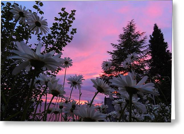 Daisies Kissing Dusk Greeting Card