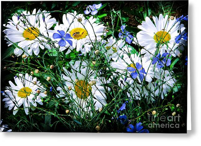 Daisies With Blue Flax And Bee Greeting Card