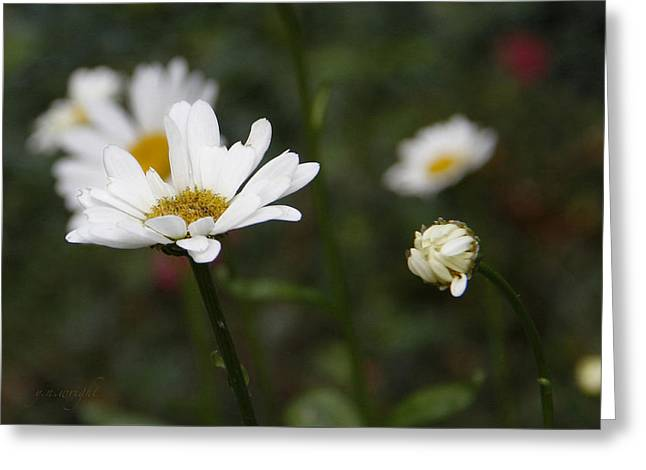 Smiling Daisies Greeting Card by Yvonne Wright
