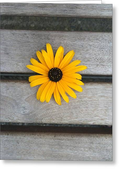 Daisy 3 Greeting Card by Izabela Bienko
