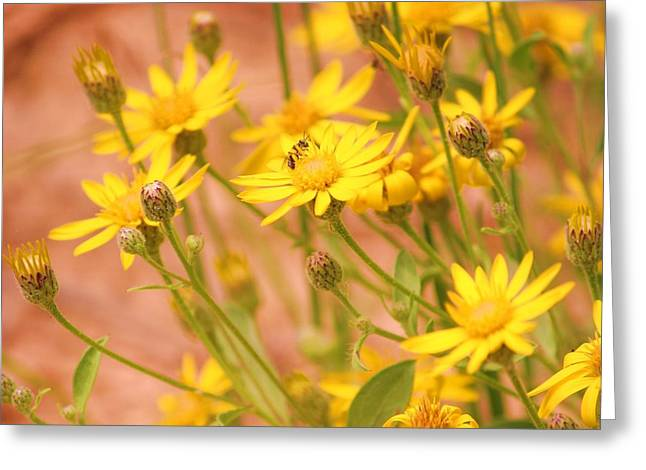 Daisy A Day Series  Greeting Card by Julie Lueders