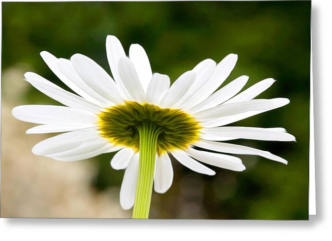 Daisy Greeting Card by Bobbi Feasel