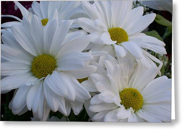 Greeting Card featuring the photograph Daisy Bouquet by Belinda Lee