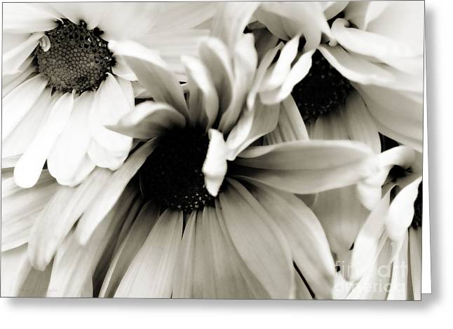 Daisy Cluster In Black And White Greeting Card by Nancy E Stein