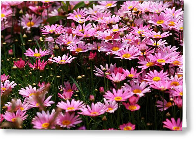 Daisy Crazy Greeting Card by Qing