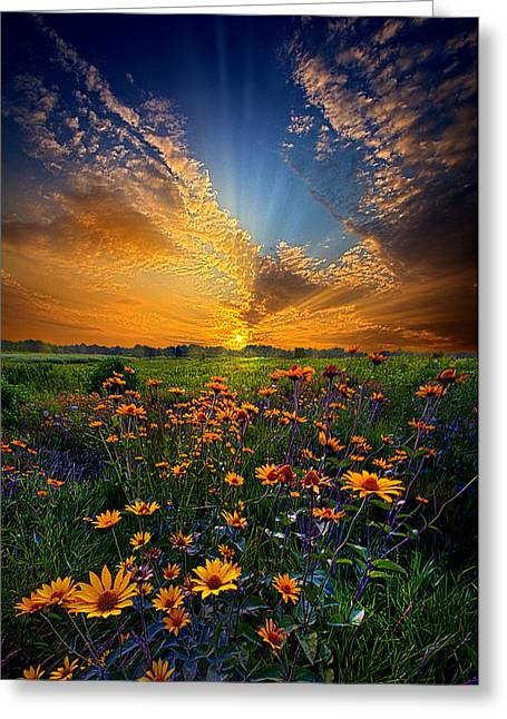 Daisy Dream Greeting Card by Phil Koch
