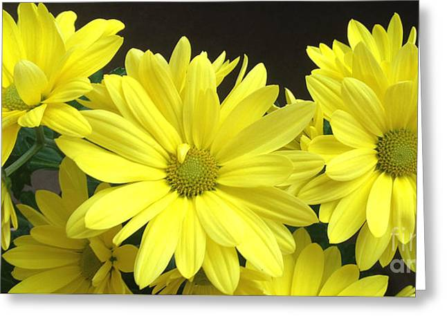 Daisy Family Greeting Card