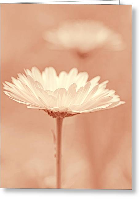 Daisy Flower In Pose Peach Pastel Greeting Card by Jennie Marie Schell
