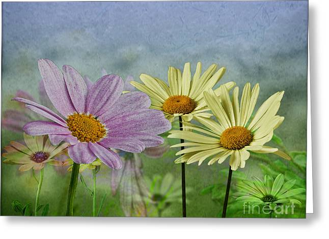Greeting Card featuring the digital art Daisy Garden by Shirley Mangini