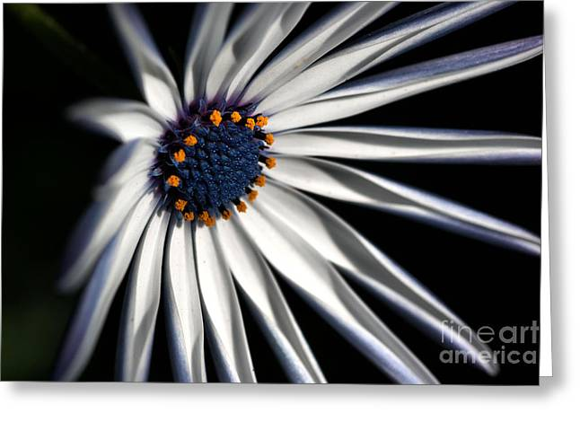 Greeting Card featuring the photograph Daisy Heart by Joy Watson