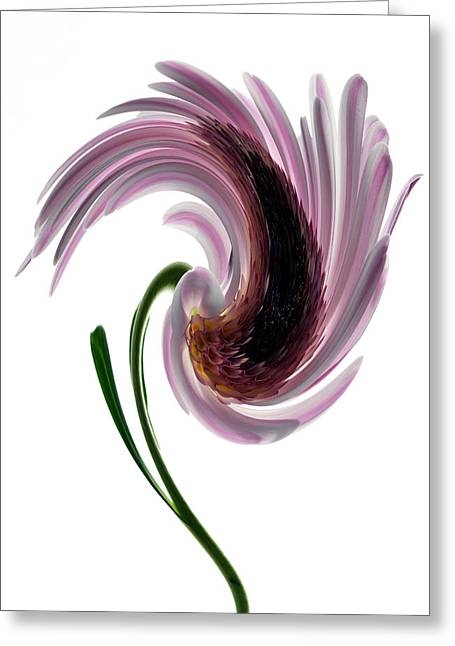 Daisy In A Twirl Greeting Card by Terence Davis