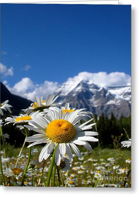 Daisy In Rocky Mountains Greeting Card by Sophia Elisseeva