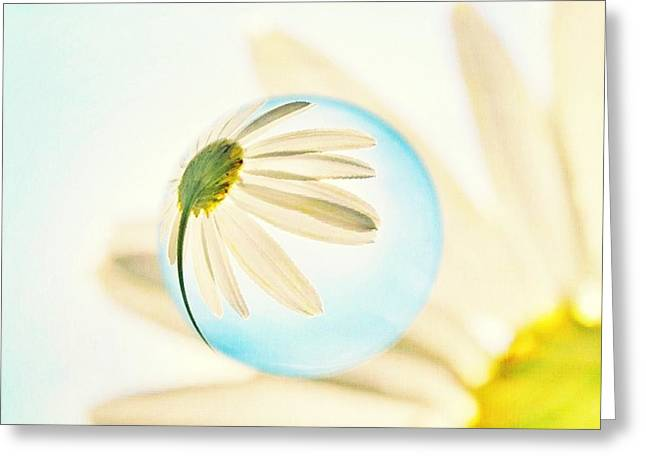 Daisy In The Bubble Greeting Card by Marianna Mills