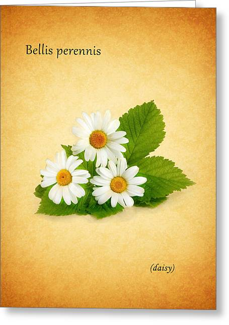 Daisy Greeting Card by Mark Rogan