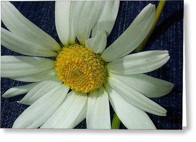 Daisy  Greeting Card by Monique Grant-Patel