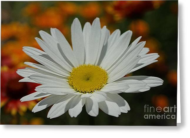 Daisy Greeting Card by Nur Roy
