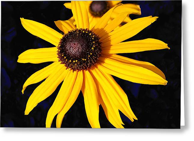 Daisy On Dark Blue Greeting Card