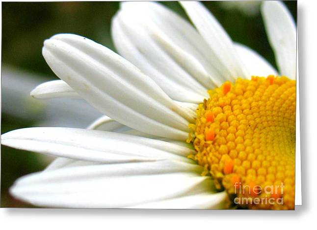 Daisy Greeting Card by Patti Whitten