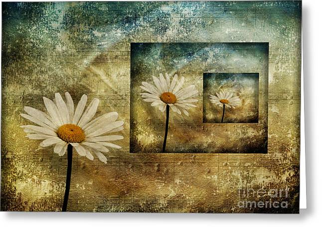 Greeting Card featuring the photograph Daisy Shadows by Shirley Mangini