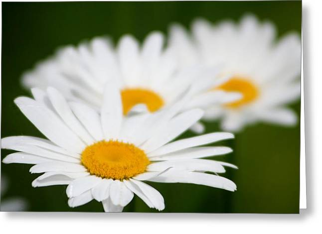 Daisy Train Greeting Card by Barbara S Nickerson