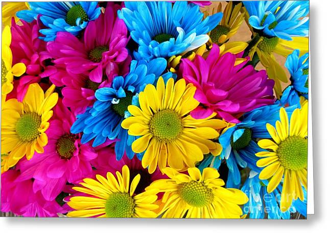 Greeting Card featuring the photograph Daisys Flowers Bloom Colorful Petals Nature by Paul Fearn
