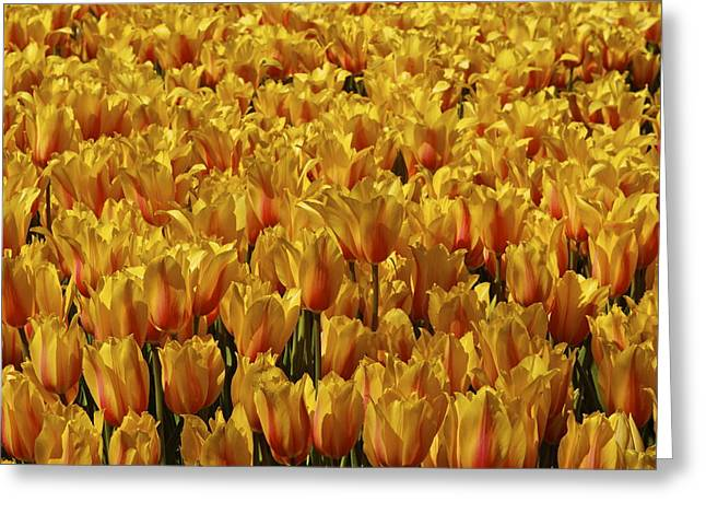 Greeting Card featuring the photograph Dallas Blooms by John Babis