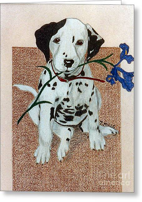 Greeting Card featuring the drawing Dalmatian Puppy by Terri Mills