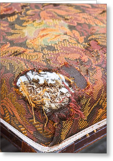 Damaged Upholstery Greeting Card by Tom Gowanlock