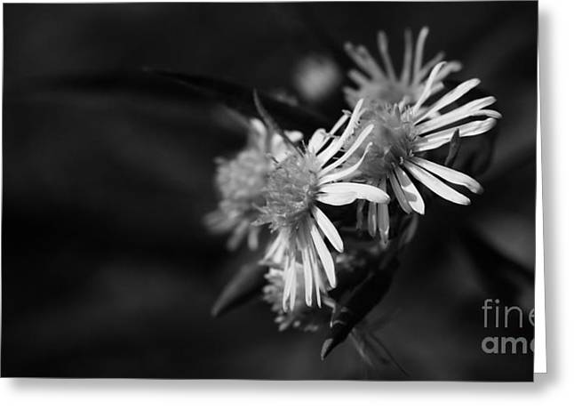 Greeting Card featuring the photograph Dames En Noir by Linda Shafer